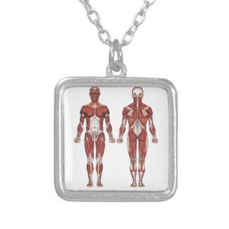 Sistema, frente y parte posterior musculares collar personalizado