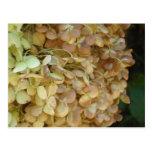 Sistema inmóvil floral postales