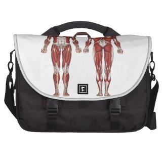 Sistema muscular, anatomía humana bolsas para portatil