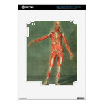 Sistema muscular superficial del frente de BO Pegatina Skin Para iPad 3