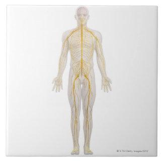 Sistema nervioso humano 2 azulejo cuadrado grande