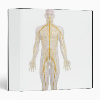 "Sistema nervioso humano 2 carpeta 1 1/2"""