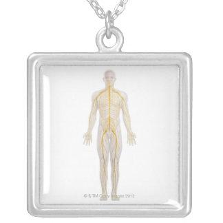 Sistema nervioso humano 2 collar plateado