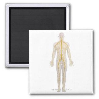 Sistema nervioso humano 2 imán cuadrado