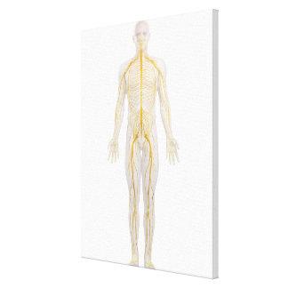 Sistema nervioso humano 2 impresión en lienzo