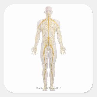 Sistema nervioso humano 2 pegatina cuadrada