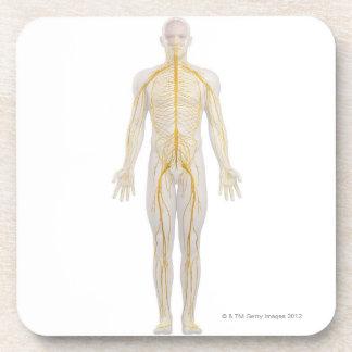 Sistema nervioso humano 2 posavasos de bebida