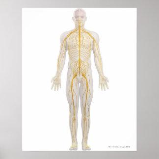 Sistema nervioso humano 2 póster
