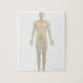 Sistema nervioso humano 2 puzzle
