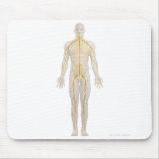 Sistema nervioso humano 2 tapete de ratones