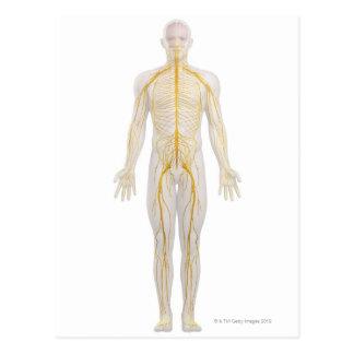 Sistema nervioso humano 2 tarjetas postales