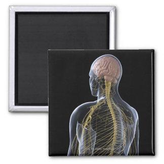Sistema nervioso humano imán cuadrado