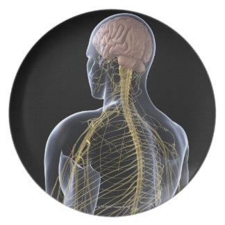 Sistema nervioso humano plato de comida