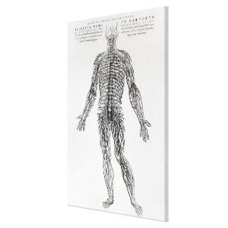 Sistema nervioso (impresión de b/w) impresión de lienzo