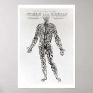 Sistema nervioso (impresión de b/w) póster