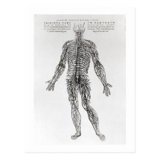 Sistema nervioso (impresión de b/w) tarjetas postales