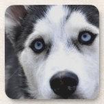 Sistema observado azul del perro esquimal de seis  posavasos de bebida