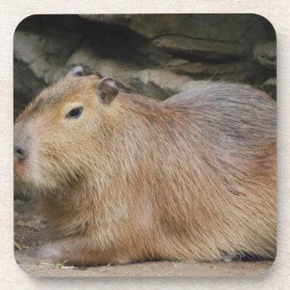 Sistema salvaje del Capybara de seis prácticos de  Posavasos