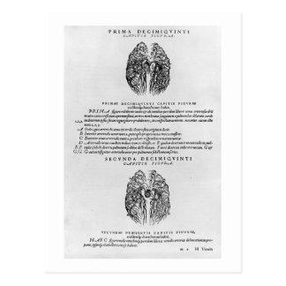Sistema vascular del cerebro postales