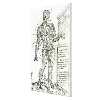 Sistema vascular según Charles Etienne Impresiones En Lona