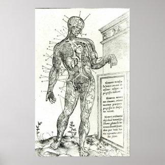 Sistema vascular según Charles Etienne Impresiones