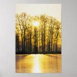 Sistemas de Sun sobre altos árboles Posters