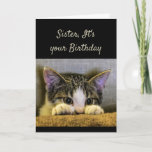 """Sister can't Hide It's your Birthday Cute Kitten Card<br><div class=""""desc"""">Sister,  It's your Birthday and no you can't hide from it.   Have a Happy Birthday!   Cute scared looking kitten</div>"""