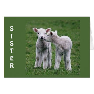 SISTER MY HEART BLEATS FOR YOU BAA BAA BAA CARD
