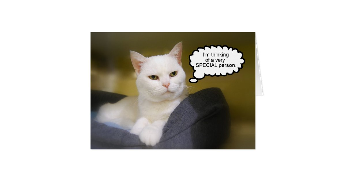 Sister White Cat Birthday Humor Card | Zazzle.com