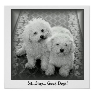 Sit...Stay...Good Dogs! Poster Print