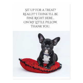 Sit Up For A Treat? Dog Postcard