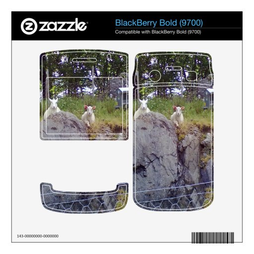Siting and standing Sheep BlackBerry Skin