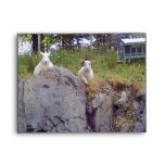 Siting and standing Sheep Envelope