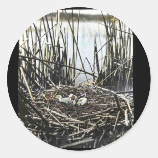 Sitio de la jerarquía en el pantano de Klamath Pegatina Redonda
