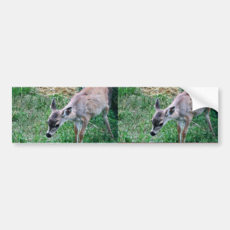 Sitka black-tailed deer bumper stickers