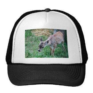 Sitka black-tailed deer trucker hat