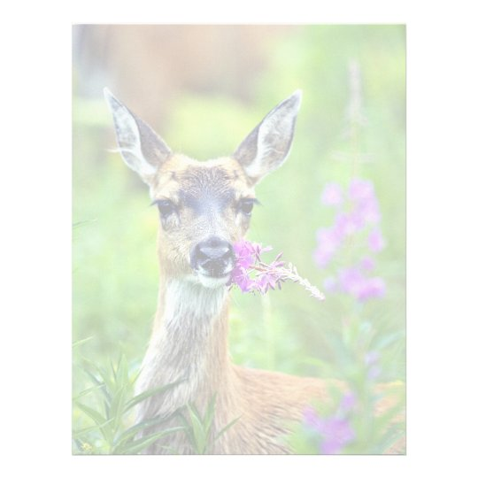 Sitka Black-tailed Deer with Fireweed Letterhead