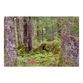 Sitka Rain Forest print