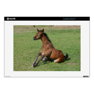 Sitting Arab Foal Laptop Decal