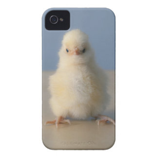 Sitting Baby Yellow Chicken, 3 days old Case-Mate iPhone 4 Case