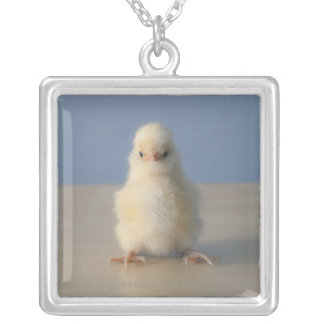Sitting Baby Yellow Chicken, 3 days old Silver Plated Necklace