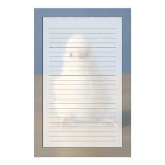 Sitting Baby Yellow Chicken, 3 days old Stationery