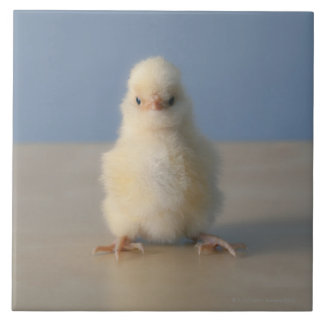 Sitting Baby Yellow Chicken, 3 days old Tile