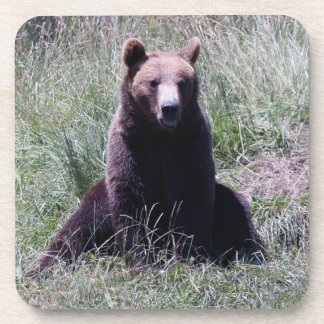 Sitting Bear Coaster