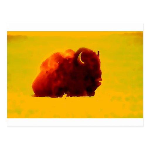 Sitting Bison Postcard