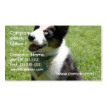 Sitting Border Collie Business Cards