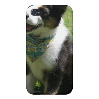 Sitting Border Collie iPhone Case Cases For iPhone 4