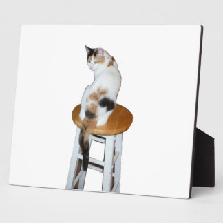 Sitting Calico Cat Photo Plaques