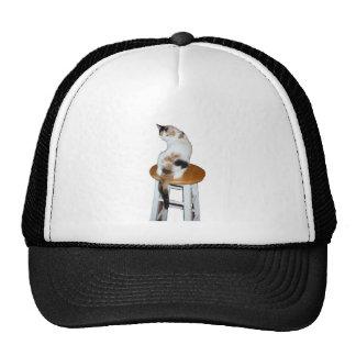 Sitting Calico Cat Trucker Hat