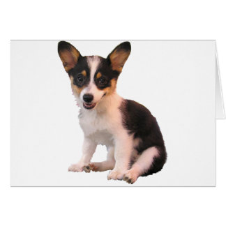 Sitting Cardigan Welsh Corgi Puppy Greeting Card